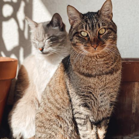 chats laura